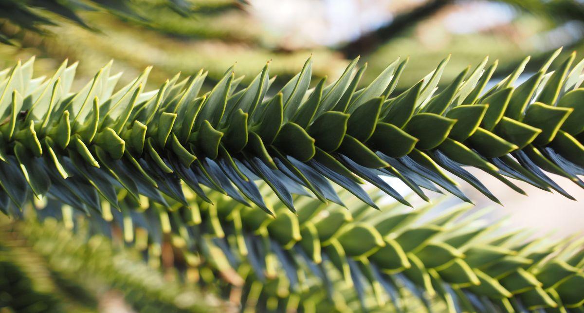 ineinandergefügte grüne Blätter mit teilweise bläulichen Schatten