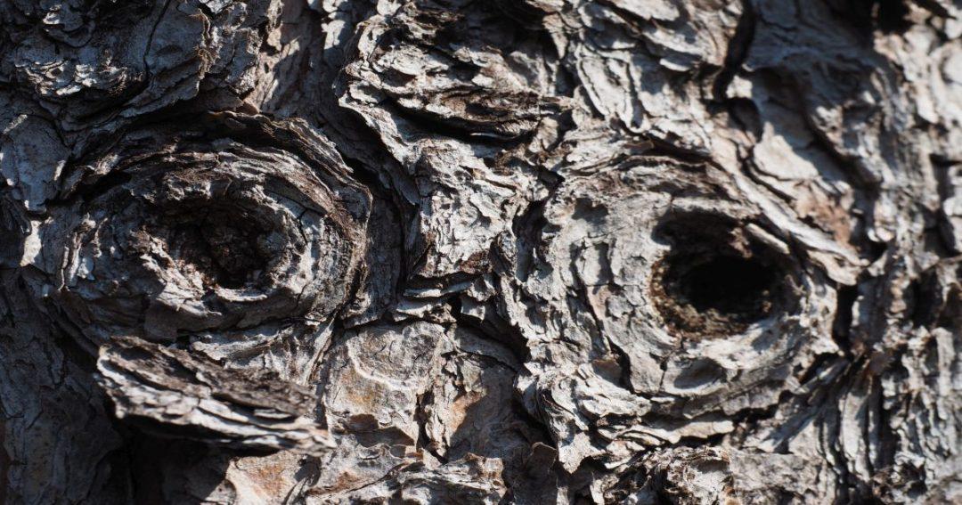 Baumrinde in der Form eines Eulengesichts